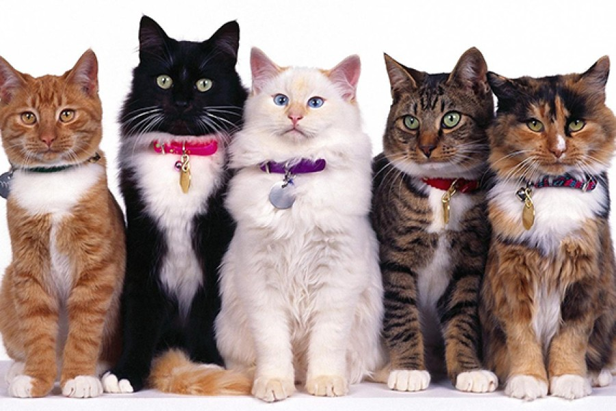 Как выбрать кошку? Полезные рекомендации